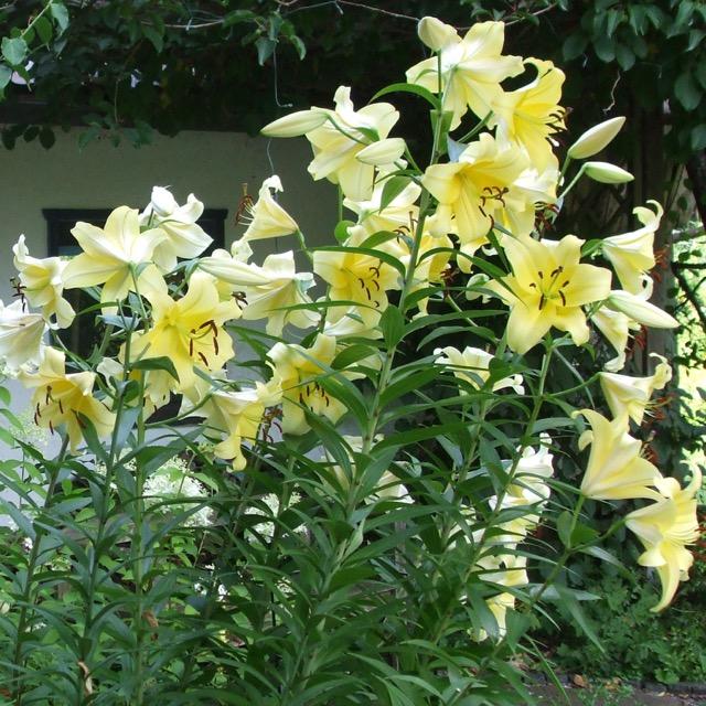 Rückmeldungen - danke für die Blumen