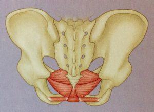 Anatomie des Beckenbodens – Lage im Becken